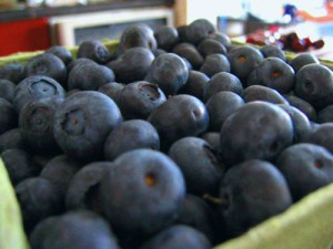 blueberries_blue_berries_393027_l