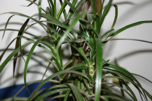 houseplant-air-filter-01